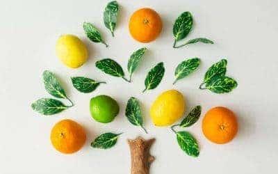 Make a Good Tree – Part 1 (Podcast)